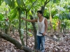 Hershey's Project / Mexico Cocoa Foundation
