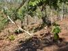 Proyecto Hershey´s/ Fundación Cacao México